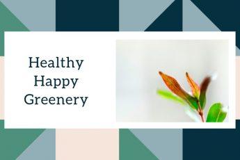 Healthy Happy Greenery Indoor Plants