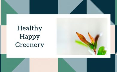 Healthy Happy Greenery Indoor Plants