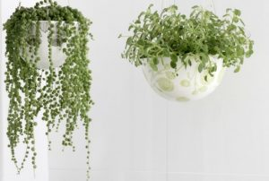 Hanging-plants-can-divide-and-define-space