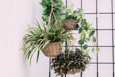 Free up floor space while incorporating your greenery